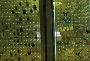 Sébastien D musée histoire naturelle paris